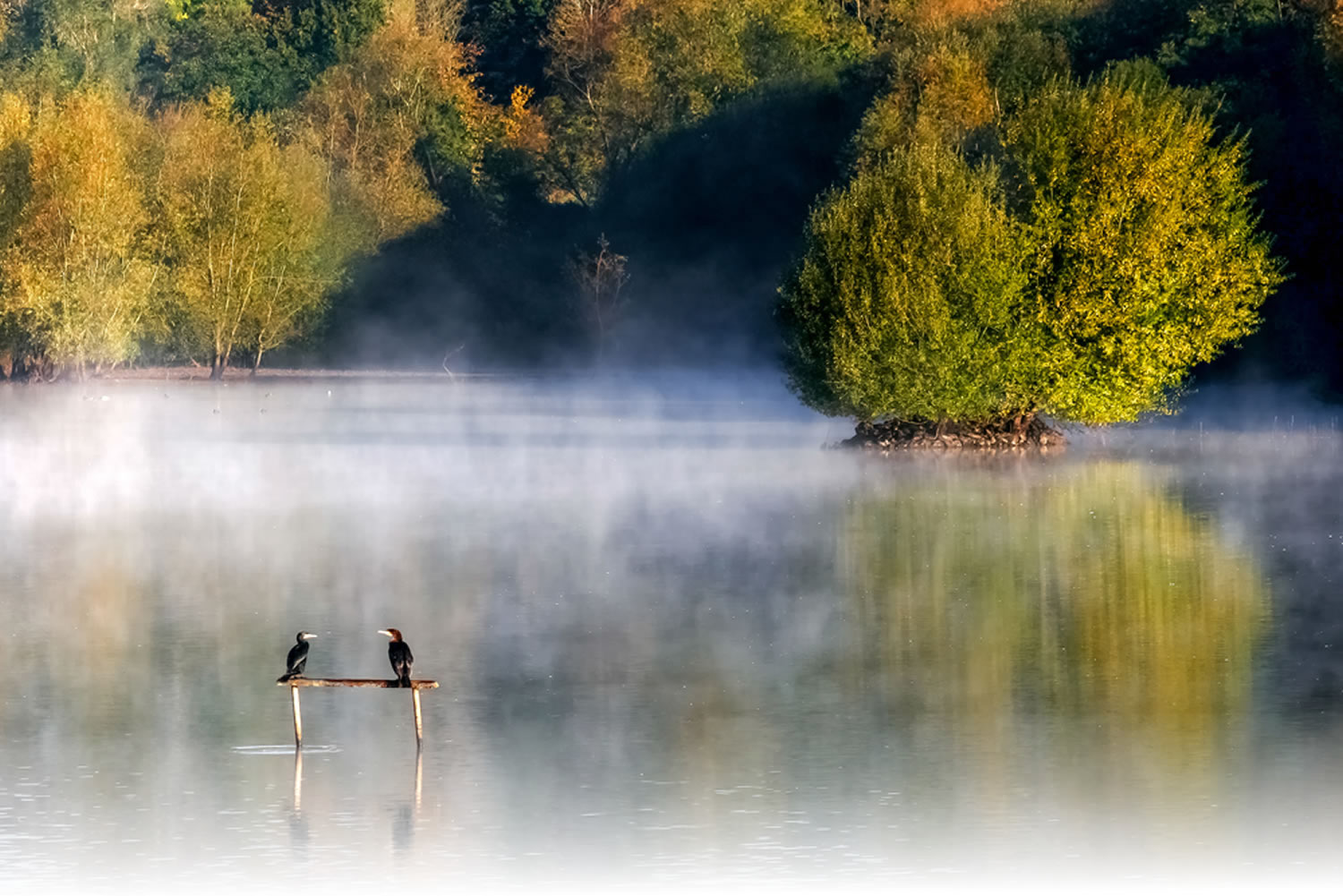 Early morning at weir wood reservoir image